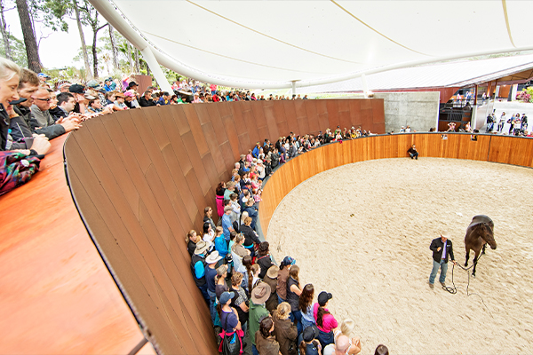 Wilinga Equestrian Centre